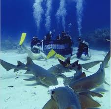 chicago booth mba essay questions analysis tips this adventurous group of students traveled together for a fun filled spring break in central america from learning to pitch to sharks in the boardroom to