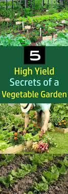 Best 25+ Vegetable gardening ideas on Pinterest | Gardening, When ...