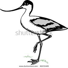 Small Picture Avocet Animal Coloring Pages Bird Pied Avocet nebulosabarcom