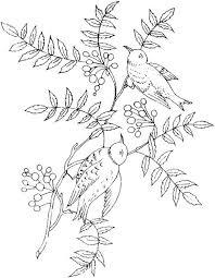 鳥 ぬりえ 大人も楽しめる細かい絵イラストのぬりえ塗り絵無料