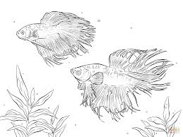 Small Picture Rainbow Fish Crawfish and Small Fish coloring page Free