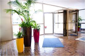 tropical office plants. Looking For A Promotion? Buy Plant Tropical Office Plants