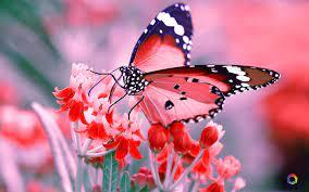 Butterfly wallpaper, Desktop wallpaper ...