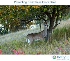 Deer Proof Gardens 4 Surefire Ways To Keep Deer Out Of Your GardenKeep Deer Away From Fruit Trees