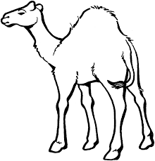 Free Printable Camel Coloring Pages For