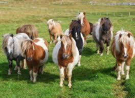 Bildergebnis für ponies