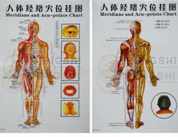 Details About Chinese Medicine Body Acupuncture Points Meridians And Acupoints Chart