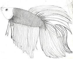 Small Picture 60 best Animals images on Pinterest Betta fish Aquarium fish