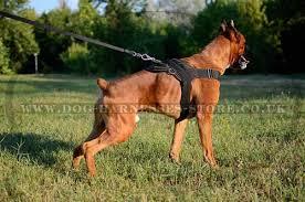 dog harness uk nylon for german boxer worldwide shipping german boxer harnesses uk