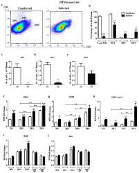 Immature Dp1 And Dp2 But Not Dp3 Thymocytes Are Greatly