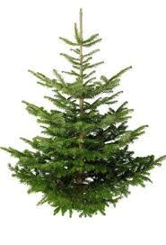 Christmas Tree Cabin Real Trees