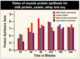 Whey Protein Chart Muscle Protein Synthesis Peaks 1 2 Hours After Exercise