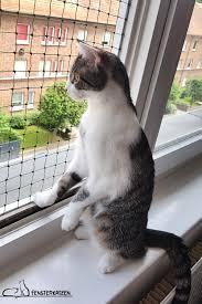 Fenstersicherung Für Katzen Ohne Bohren Here Kitty Kitty Katzen