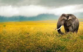 Ultra HD 4K Elephant Wallpapers HD ...