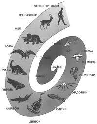 по биологии Этапы эволюции животных