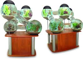 Collect this idea Fish Aquarium
