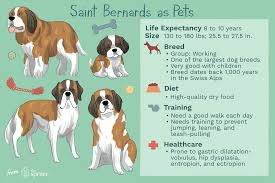 Saint Bernard Height Chart Saint Bernard Full Profile History And Care