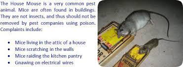 rat poison pellets home depot. Mouse Repellent Analysis Rat Poison Pellets Home Depot