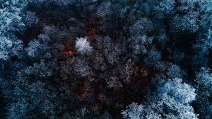 Cool Frozen Forest AmazingPictcom Wallpapers Pinterest