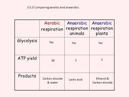 aerobic cycle respiration flow chart medschoolsinfo aerobic and anaerobic respiration flow chart medium