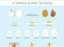Simple Info Graphics 17 Beautiful Examples Of Clean And Minimal Infographics Designbeep
