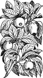 Free Image On Pixabay Apples Tree