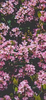 nv68-flower-pink-spring-happy-nature