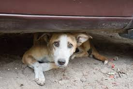 autobiography of a street dog essay street dog