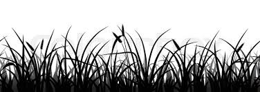 tall grass silhouette. Plain Tall Seamless Grass Silhouette On White Vector Illustration Stock  Colourbox Rh Com Tree And Tall In Tall Grass Silhouette