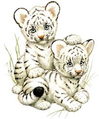 white tiger cubs drawing. Beautiful Drawing White Tiger Cubs  Animated Gif Pictures And Postcards For Tiger Cubs Drawing W