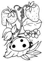 Kleurplaten Dieren Kriebelbeestjes Juf Milou