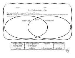 Plant Cells Vs Animal Cells Venn Diagram Plant Vs Animal Cells Venn Diagram By Cloey Holzman Tpt