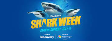 How to Watch Shark Week 2021 For Free ...