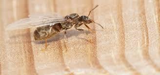 Ants In Bathroom Best Inspiration