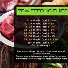 Raw Feeding Chart For Puppies Raw Dog Food Feeding Guide Prodog