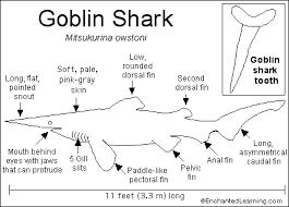 similiar shark life cycle diagram keywords great white shark life cycle diagram printable wiring diagram