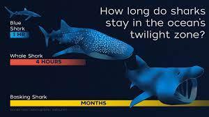 Shark Week 2021: Sharks and the Ocean's ...