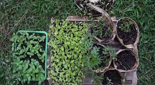 there are a million and one resources out there on starting your own vegetable garden and growing your own food here is our take and detailed guide for