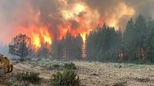 Bootleg Fire rages in Oregon, burning ...