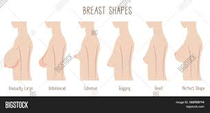 Breast Chart Breast Shape Chart Vector Photo Free Trial Bigstock