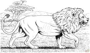 Small Picture Walking African Lion coloring page Free Printable Coloring Pages