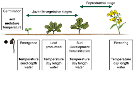 Cotton Growth Stage Chart Accessing And Using Day Degrees In Field Crops As A Tool To