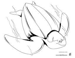 Small Picture Loggerhead sea turtle coloring pages Hellokidscom