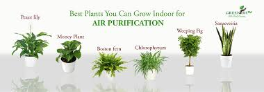 Check out 5 Air Purifying House Plants