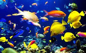 Live Aquarium Wallpaper Group 37
