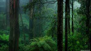 718573 Title Misty Green Forest Earth ...