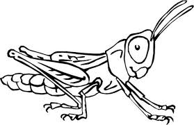 Small Picture Insects Coloring Pages Printable