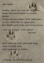 Bildergebnis Für Regenbogenbrücke Zitate Hund Starb Sterben