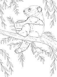 Baby Panda Zit In De Boom Kleurplaat Gratis Kleurplaten Printen