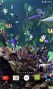 Aquarium 4K Video Wallpaper for Android ...